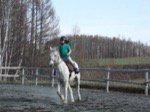 HORSE-COMPANY ホースカンパニー