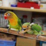 ペットショップ小鳥の店
