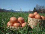 自然卵養鶏 平岡農園