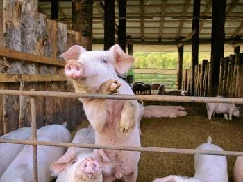 農事組合法人 一心生産組合 - 上富良野町/畜産業 [ライナーウェブ]
