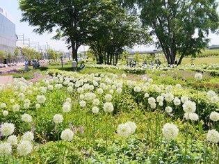 あさひかわ北彩都ガーデン(ガーデンセンター)
