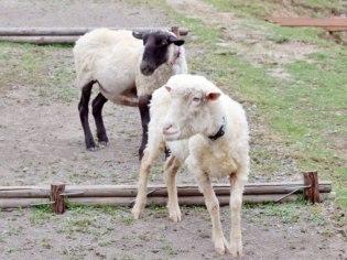 旭川市旭山動物園